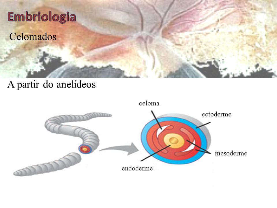 Pseudocelomados ectoderme mesoderme endoderme Asquelmintos pseudoceloma