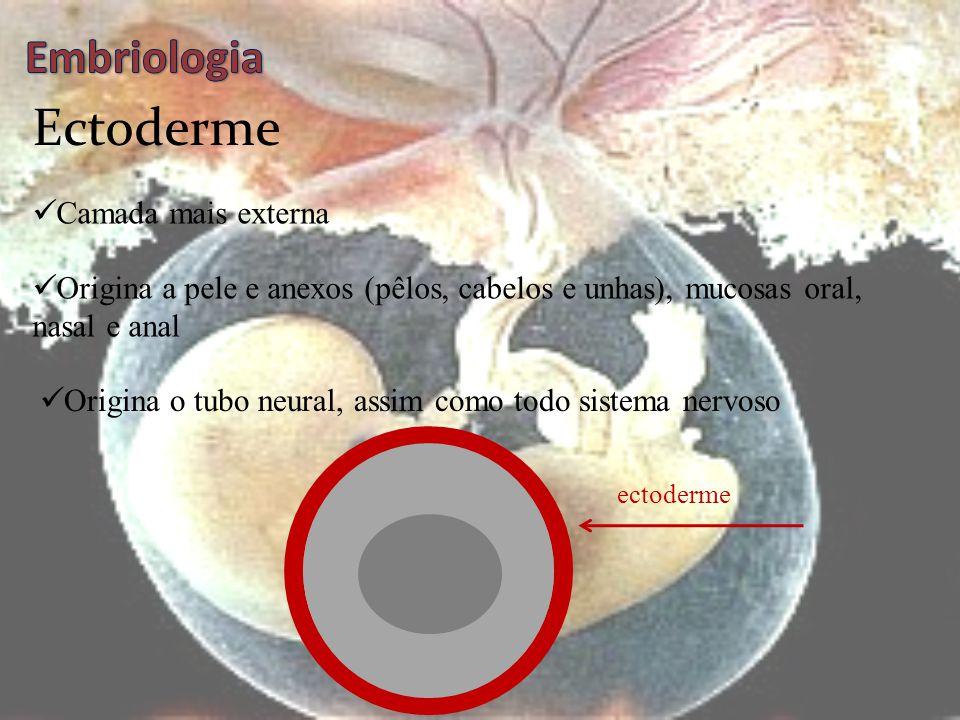 Folhetos Embrionários  Camada de tecidos originados na gástrula e nêurula  Neles ocorre a diferenciação celular  Originam os mais diversos tecidos