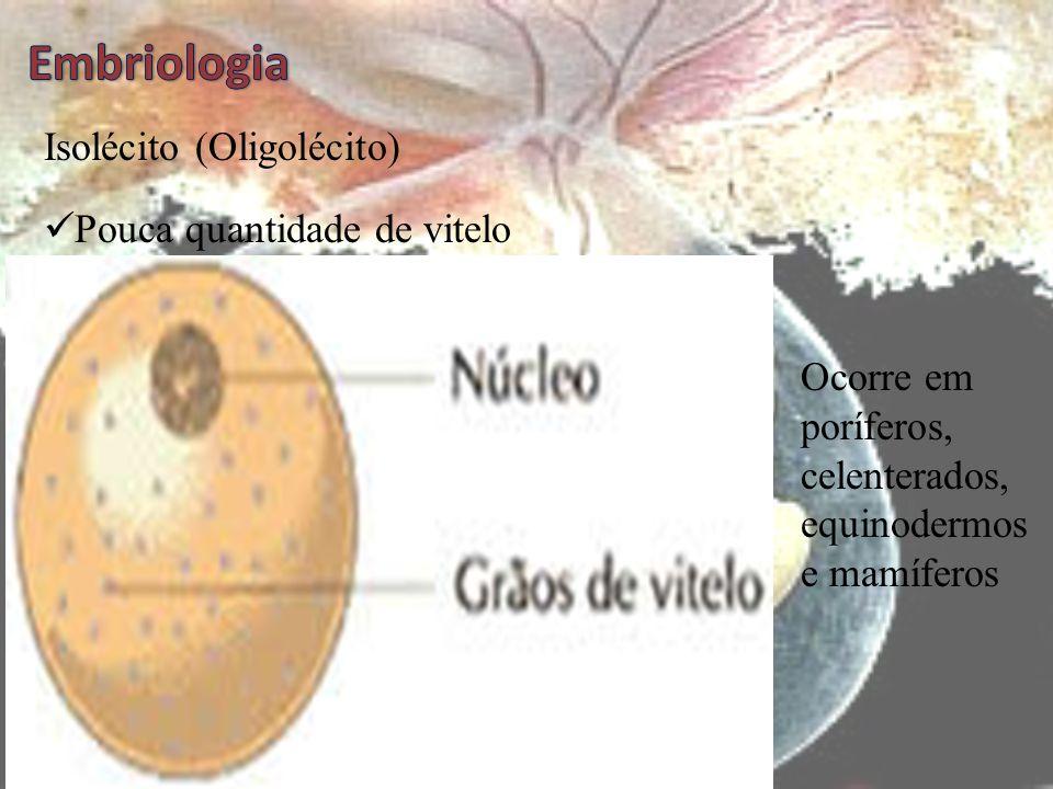 Tipos de Ovos (óvulos)  Os ovos são classificados quanto a distribuição de vitelo  Vitelo – substâncias nutritivas (grãos de lipídios e proteínas) q