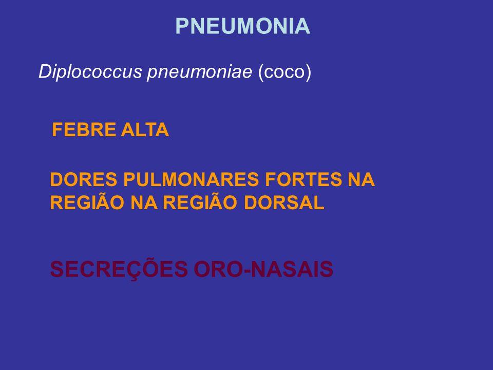 PNEUMONIA Diplococcus pneumoniae (coco) DORES PULMONARES FORTES NA REGIÃO NA REGIÃO DORSAL FEBRE ALTA SECREÇÕES ORO-NASAIS