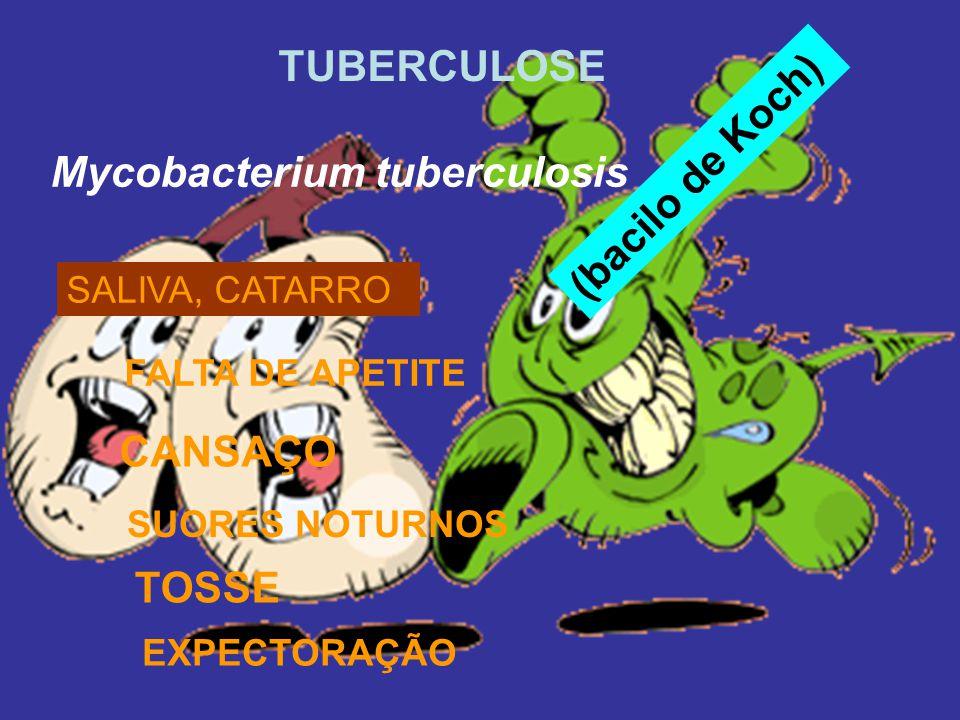 (bacilo de Koch) TUBERCULOSE Mycobacterium tuberculosis SALIVA, CATARRO SUORES NOTURNOS EXPECTORAÇÃO CANSAÇO FALTA DE APETITE TOSSE