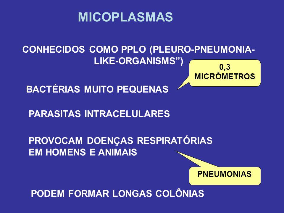 MICOPLASMAS CONHECIDOS COMO PPLO (PLEURO-PNEUMONIA- LIKE-ORGANISMS ) BACTÉRIAS MUITO PEQUENAS 0,3 MICRÔMETROS PARASITAS INTRACELULARES PROVOCAM DOENÇAS RESPIRATÓRIAS EM HOMENS E ANIMAIS PNEUMONIAS PODEM FORMAR LONGAS COLÔNIAS