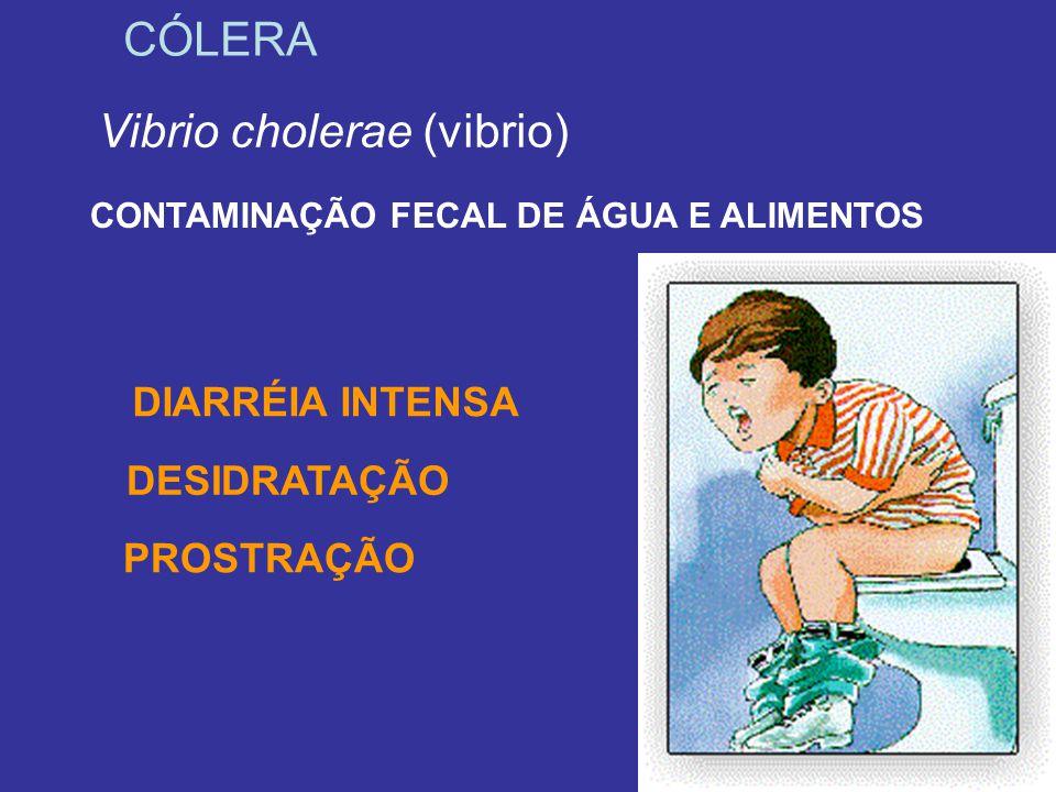 CÓLERA Vibrio cholerae (vibrio) CONTAMINAÇÃO FECAL DE ÁGUA E ALIMENTOS PROSTRAÇÃO DIARRÉIA INTENSA DESIDRATAÇÃO
