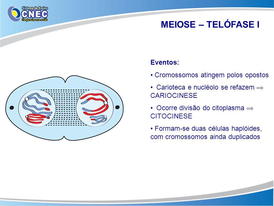 MEIOSE – TELÓFASE I Eventos: • Cromossomos atingem polos opostos • Carioteca e nucléolo se refazem  CARIOCINESE • Ocorre divisão do citoplasma  CITO
