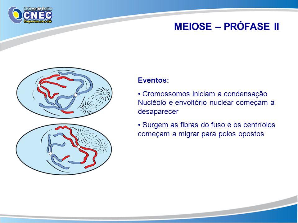 MEIOSE – PRÓFASE II Eventos: • Cromossomos iniciam a condensação Nucléolo e envoltório nuclear começam a desaparecer • Surgem as fibras do fuso e os c