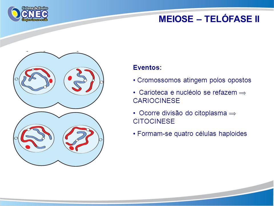 MEIOSE – TELÓFASE II Eventos: • Cromossomos atingem polos opostos • Carioteca e nucléolo se refazem  CARIOCINESE • Ocorre divisão do citoplasma  CIT