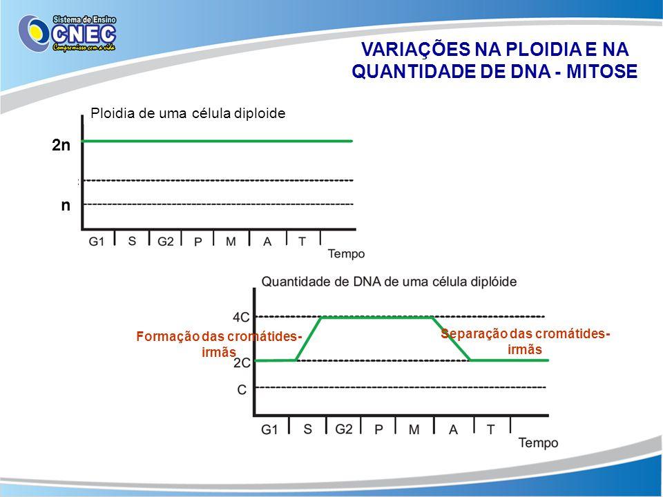 VARIAÇÕES NA PLOIDIA E NA QUANTIDADE DE DNA - MITOSE Ploidia de uma célula diploide 2n n Formação das cromátides- irmãs Separação das cromátides- irmã
