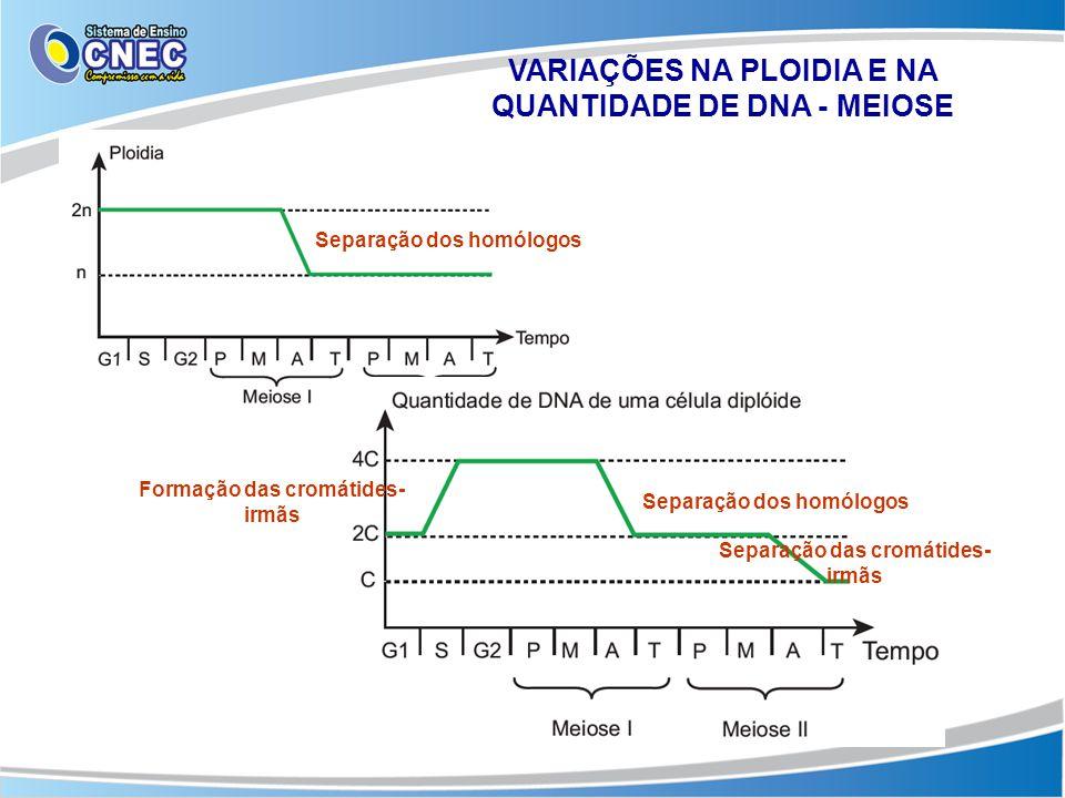 VARIAÇÕES NA PLOIDIA E NA QUANTIDADE DE DNA - MEIOSE Separação dos homólogos Formação das cromátides- irmãs Separação dos homólogos Separação das crom
