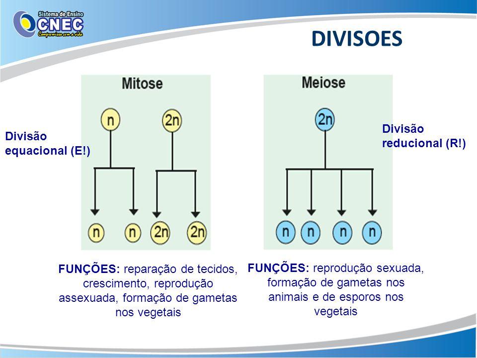 DIVISOES FUNÇÕES: reparação de tecidos, crescimento, reprodução assexuada, formação de gametas nos vegetais FUNÇÕES: reprodução sexuada, formação de g