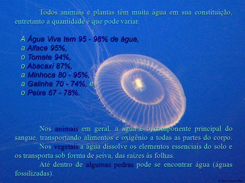 Dr. Glaucio Gonçalves Tiago Todos animais e plantas têm muita água em sua constituição, entretanto a quantidade é que pode variar. A Água Viva tem 95