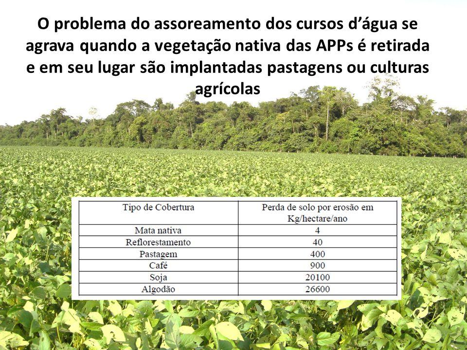 O problema do assoreamento dos cursos d'água se agrava quando a vegetação nativa das APPs é retirada e em seu lugar são implantadas pastagens ou cultu