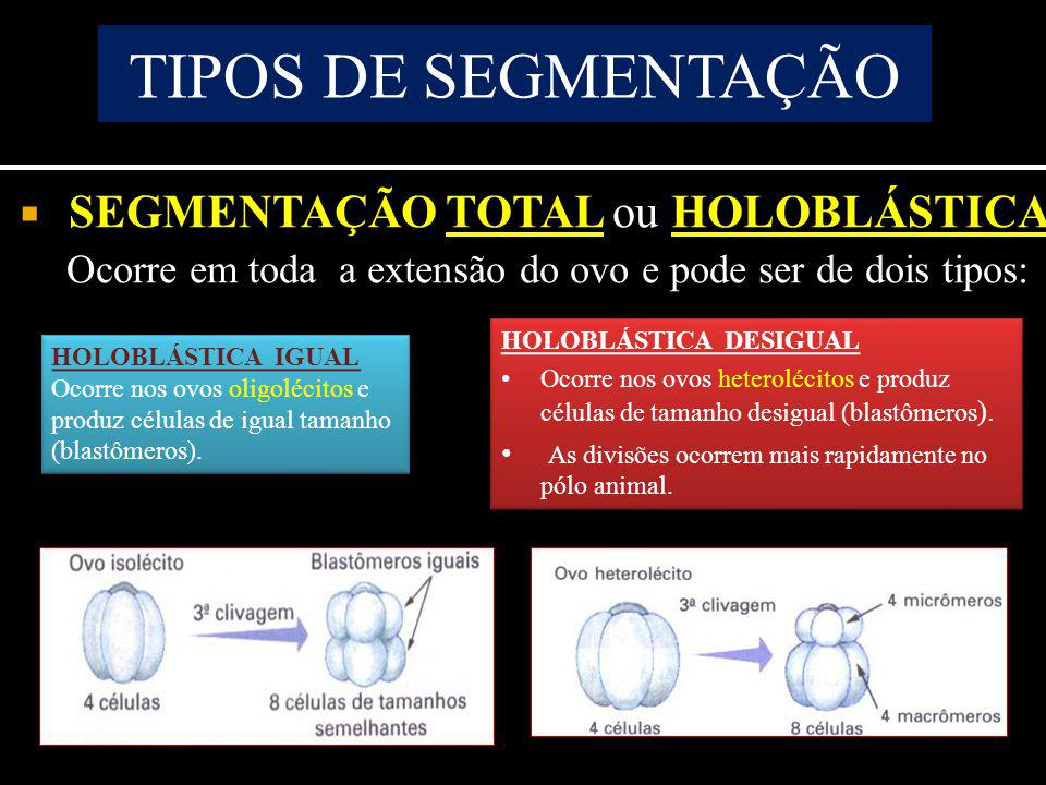 SEGMENTAÇÃO TOTAL ou HOLOBLÁSTICA Ocorre em toda a extensão do ovo e pode ser de dois tipos: TIPOS DE SEGMENTAÇÃO HOLOBLÁSTICA IGUAL Ocorre nos ovos