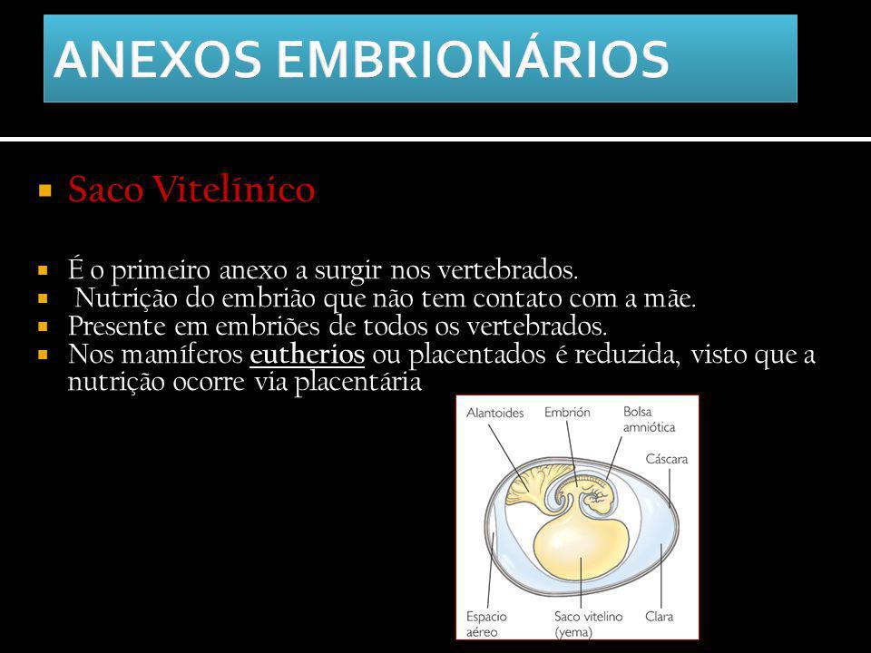  Saco Vitelínico  É o primeiro anexo a surgir nos vertebrados.  Nutrição do embrião que não tem contato com a mãe.  Presente em embriões de todos