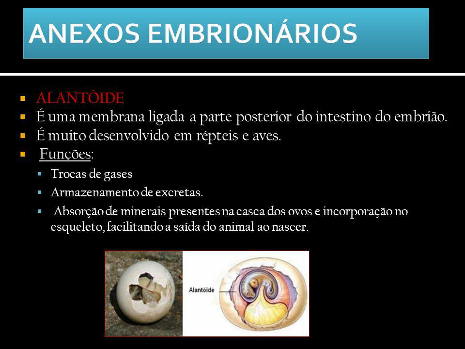  ALANTÓIDE  É uma membrana ligada a parte posterior do intestino do embrião.  É muito desenvolvido em répteis e aves.  Funções:  Trocas de gases