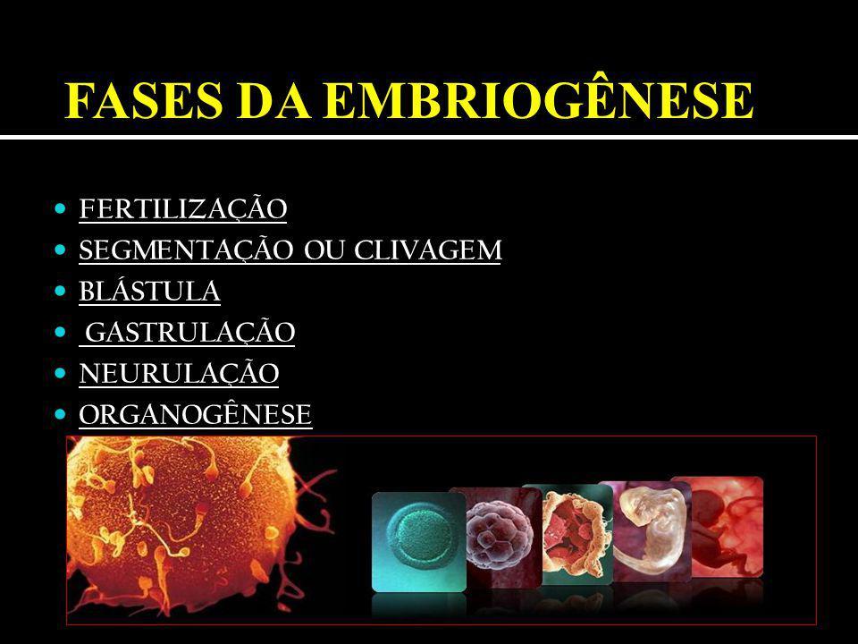 1.Capacitação dos espermatozóides (dentro do trato feminino) 2.
