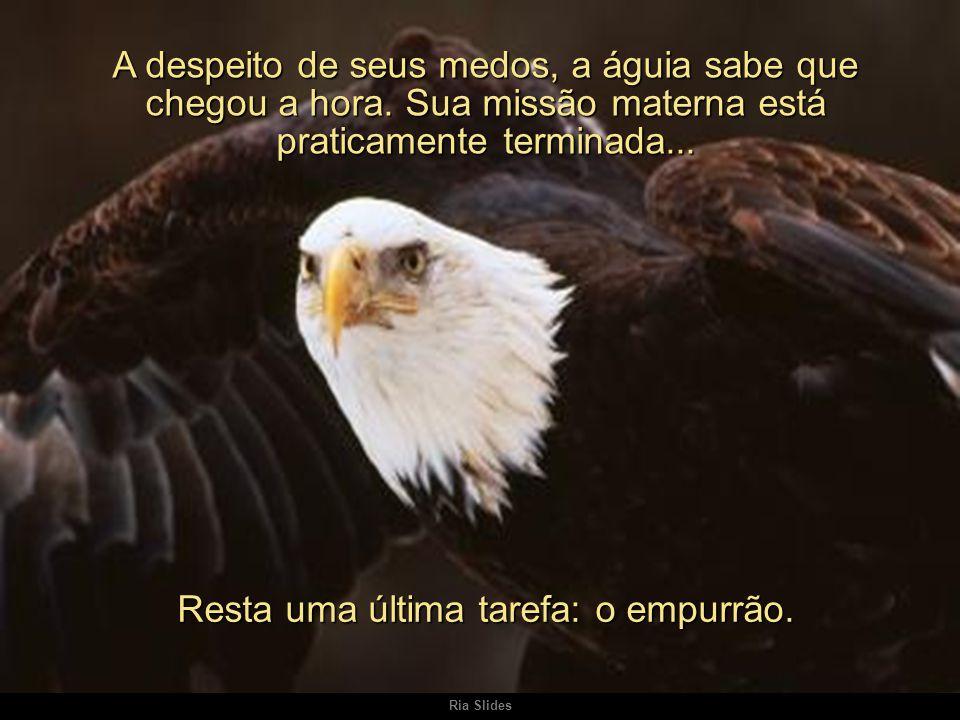 Ria Slides A despeito de seus medos, a águia sabe que chegou a hora.