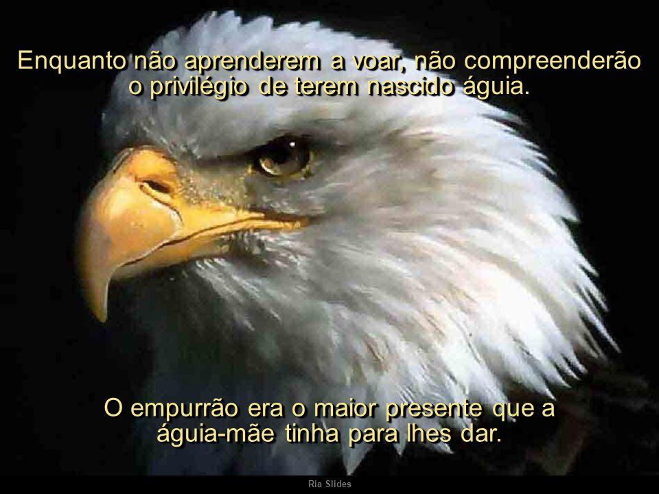 Ria Slides Enquanto não aprenderem a voar, não compreenderão o privilégio de terem nascido águia.