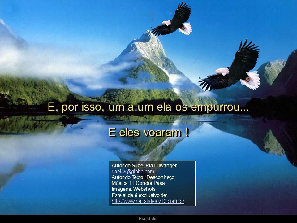 Ria Slides Enquanto não aprenderem a voar, não compreenderão o privilégio de terem nascido águia. Enquanto não aprenderem a voar, não compreenderão o