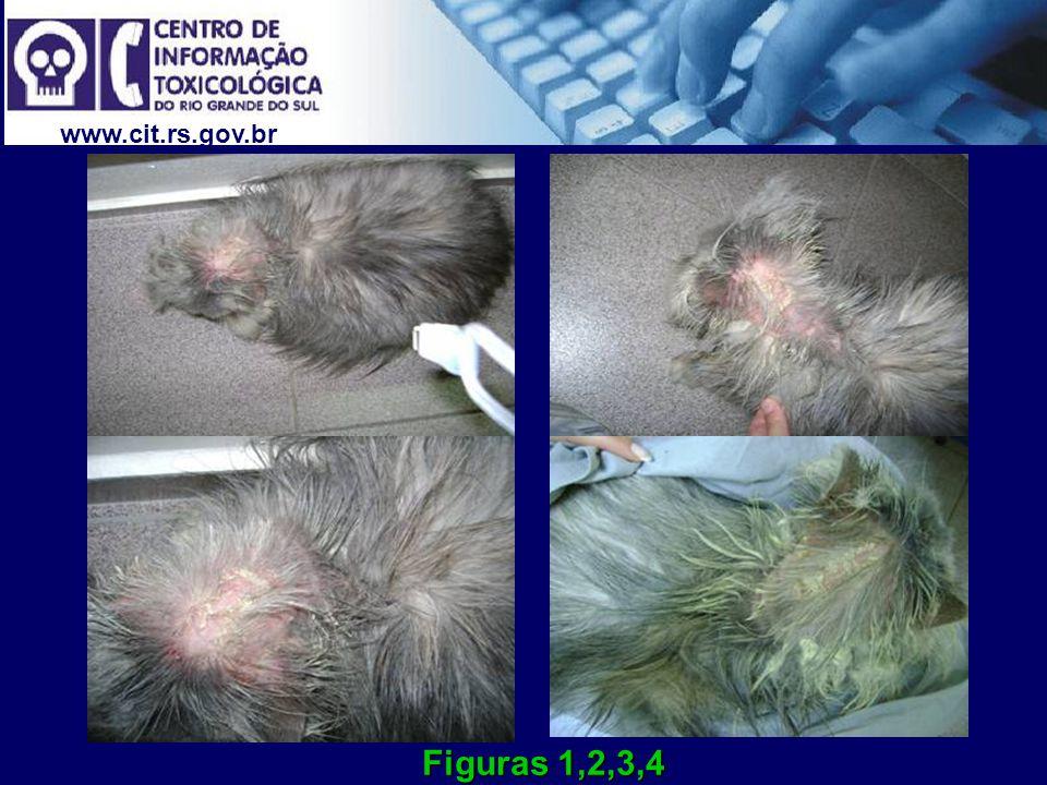 www.cit.rs.gov.br O proprietário por conta própria administrou por via dérmica, uma associação de óleo Johnson e enxofre.
