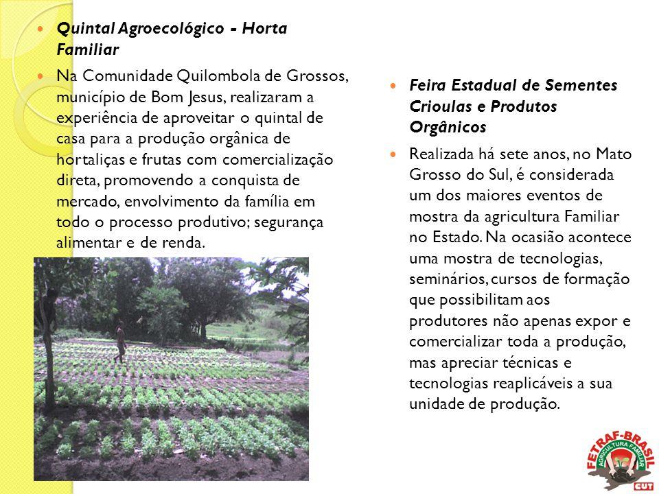  Quintal Agroecológico - Horta Familiar  Na Comunidade Quilombola de Grossos, município de Bom Jesus, realizaram a experiência de aproveitar o quint