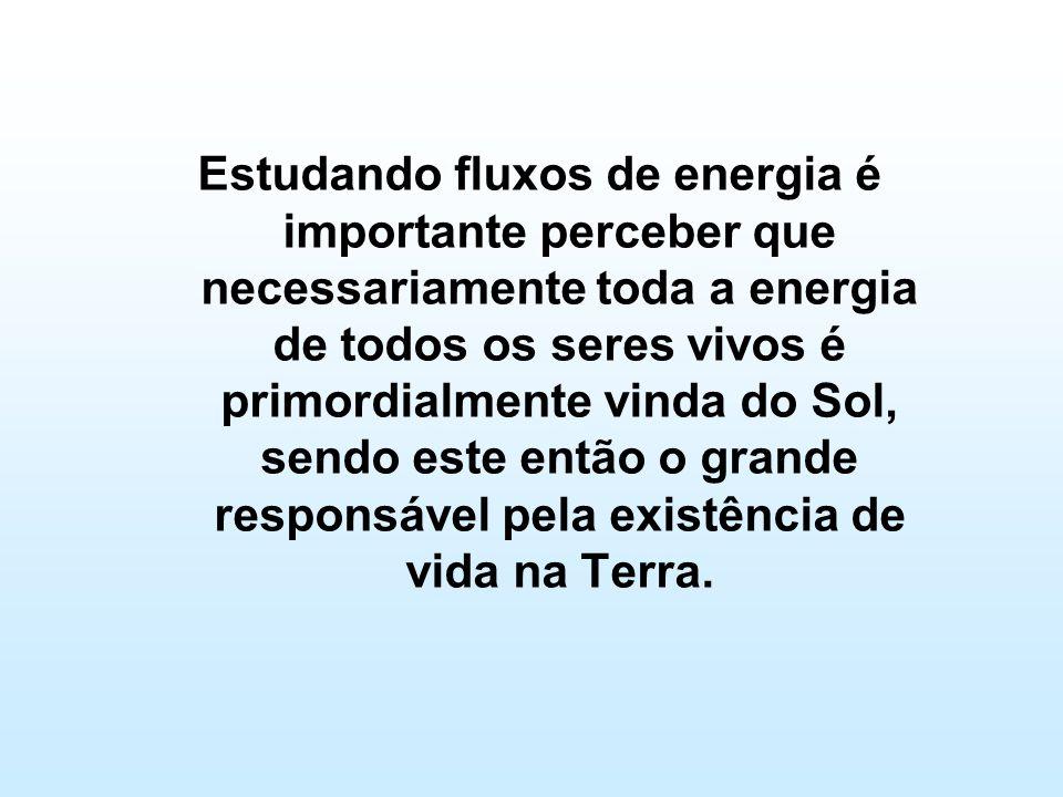 Estudando fluxos de energia é importante perceber que necessariamente toda a energia de todos os seres vivos é primordialmente vinda do Sol, sendo est
