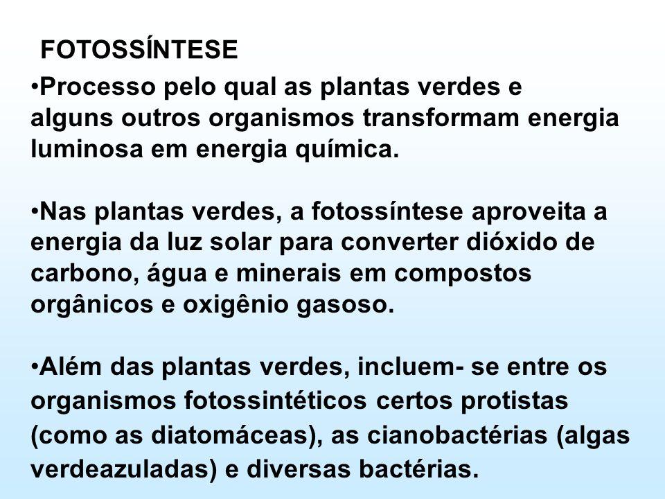 FOTOSSÍNTESE •Processo pelo qual as plantas verdes e alguns outros organismos transformam energia luminosa em energia química. •Nas plantas verdes, a
