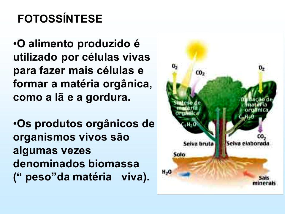 FOTOSSÍNTESE •O alimento produzido é utilizado por células vivas para fazer mais células e formar a matéria orgânica, como a lã e a gordura. •Os produ
