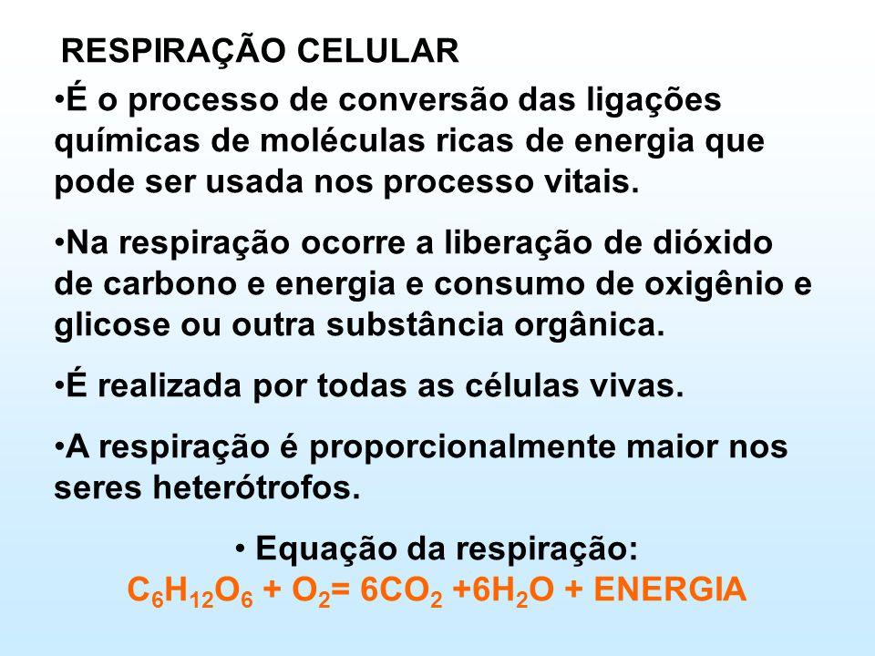 RESPIRAÇÃO CELULAR •É o processo de conversão das ligações químicas de moléculas ricas de energia que pode ser usada nos processo vitais.