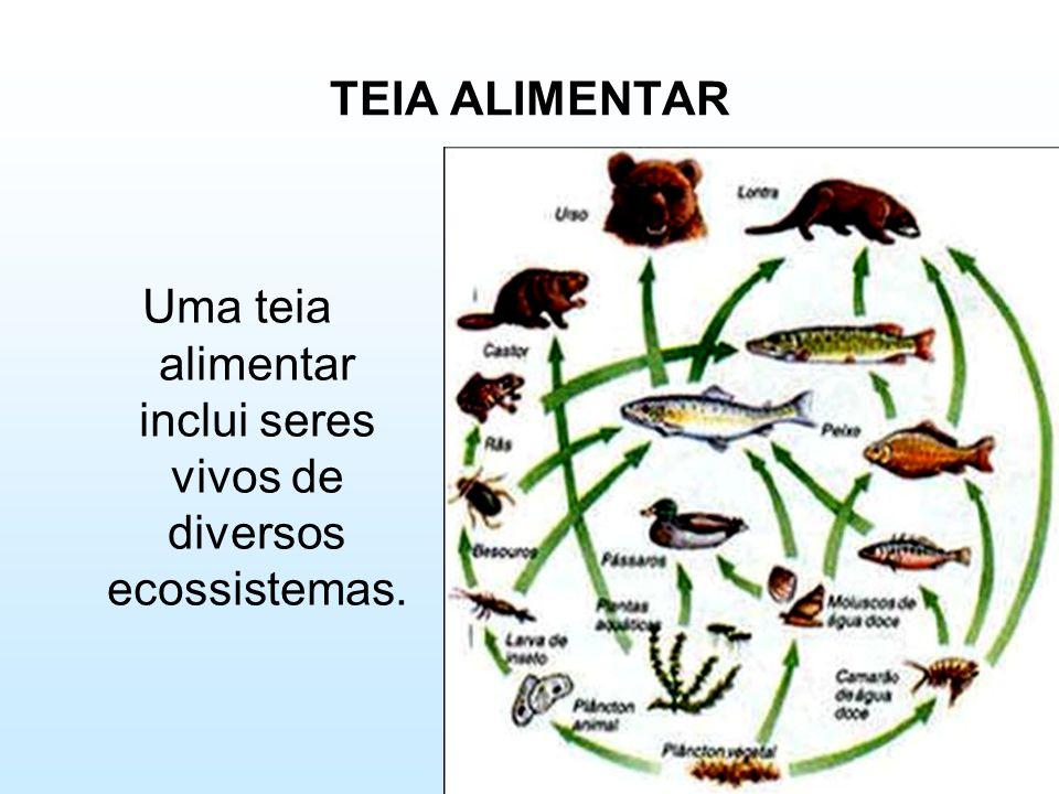 TEIA ALIMENTAR Uma teia alimentar inclui seres vivos de diversos ecossistemas.