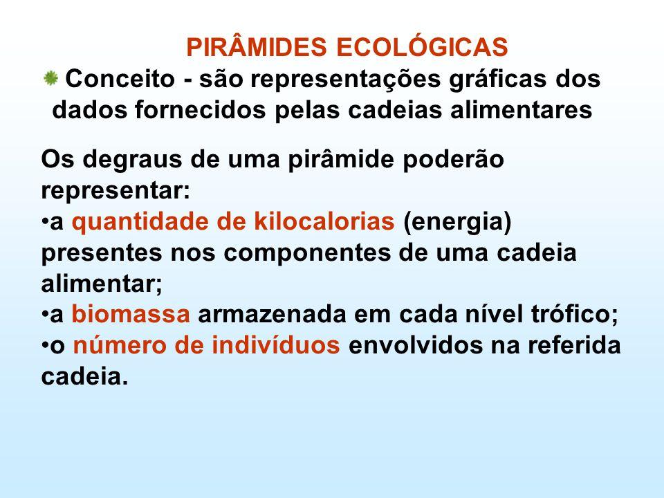 PIRÂMIDES ECOLÓGICAS Conceito - são representações gráficas dos dados fornecidos pelas cadeias alimentares Os degraus de uma pirâmide poderão representar: •a quantidade de kilocalorias (energia) presentes nos componentes de uma cadeia alimentar; •a biomassa armazenada em cada nível trófico; •o número de indivíduos envolvidos na referida cadeia.