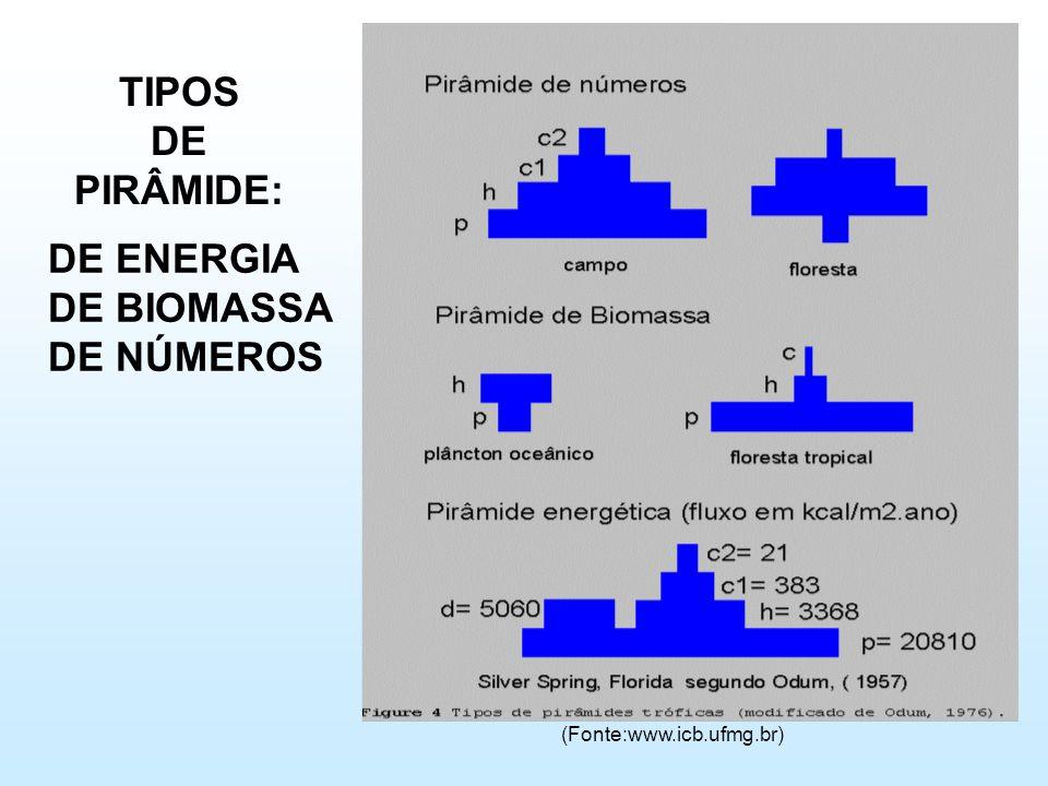 TIPOS DE PIRÂMIDE: (Fonte:www.icb.ufmg.br) DE ENERGIA DE BIOMASSA DE NÚMEROS