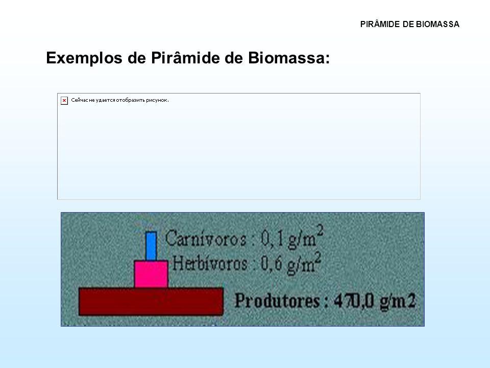 Exemplos de Pirâmide de Biomassa: PIRÂMIDE DE BIOMASSA