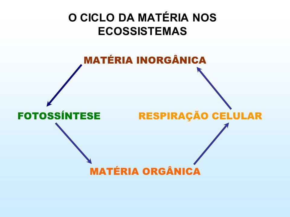 O CICLO DA MATÉRIA NOS ECOSSISTEMAS MATÉRIA INORGÂNICA FOTOSSÍNTESE RESPIRAÇÃO CELULAR MATÉRIA ORGÂNICA
