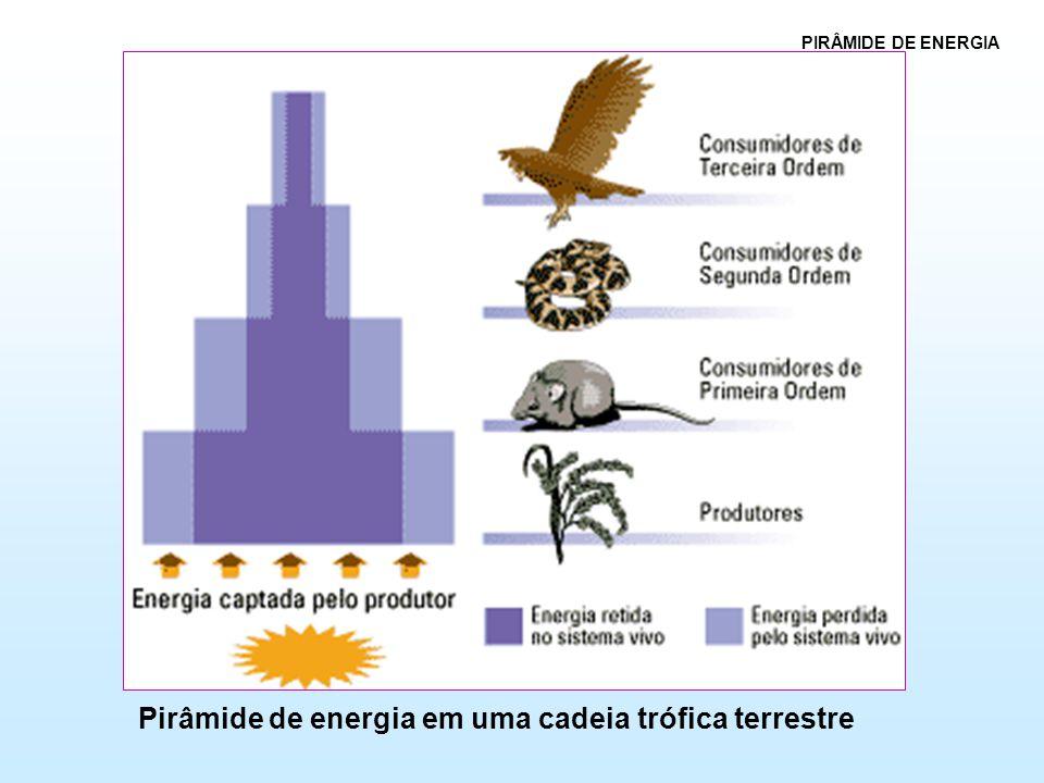 Pirâmide de energia em uma cadeia trófica terrestre PIRÂMIDE DE ENERGIA
