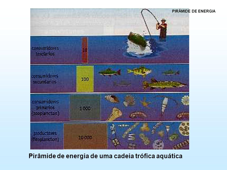Pirâmide de energia de uma cadeia trófica aquática PIRÂMIDE DE ENERGIA