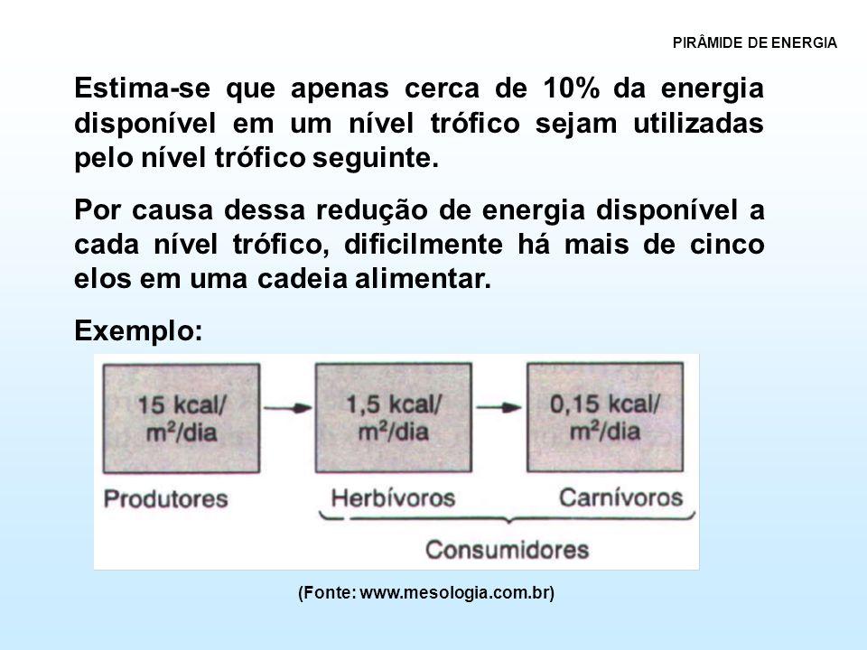 PIRÂMIDE DE ENERGIA Estima-se que apenas cerca de 10% da energia disponível em um nível trófico sejam utilizadas pelo nível trófico seguinte. Por caus