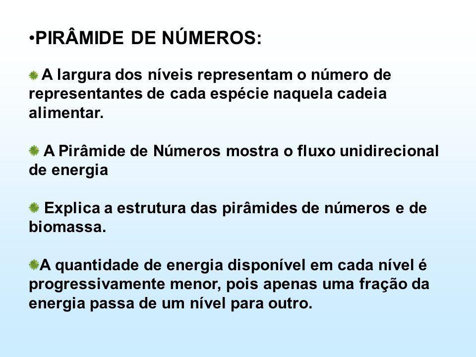 •PIRÂMIDE DE NÚMEROS: A largura dos níveis representam o número de representantes de cada espécie naquela cadeia alimentar. A Pirâmide de Números most