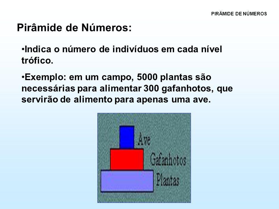 Pirâmide de Números: PIRÃMIDE DE NÚMEROS •Indica o número de indivíduos em cada nível trófico. •Exemplo: em um campo, 5000 plantas são necessárias par