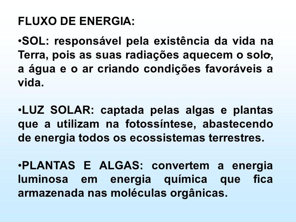 FLUXO DE ENERGIA: •SOL: responsável pela existência da vida na Terra, pois as suas radiações aquecem o solo, a água e o ar criando condições favoráveis a vida.