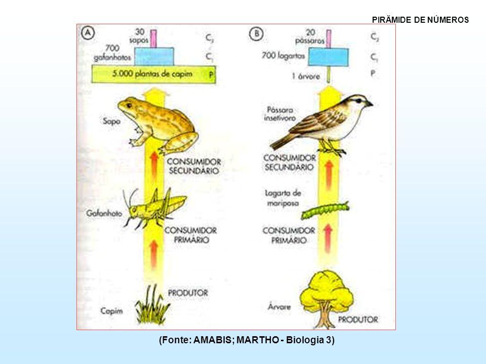 (Fonte: AMABIS; MARTHO - Biologia 3) PIRÃMIDE DE NÚMEROS