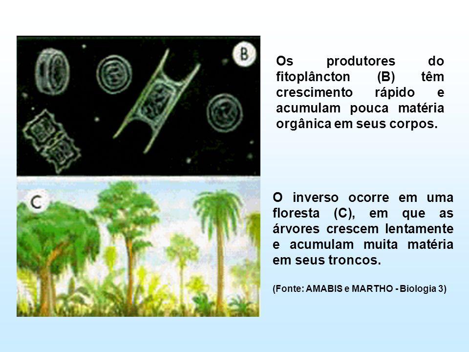 Os produtores do fitoplâncton (B) têm crescimento rápido e acumulam pouca matéria orgânica em seus corpos. O inverso ocorre em uma floresta (C), em qu