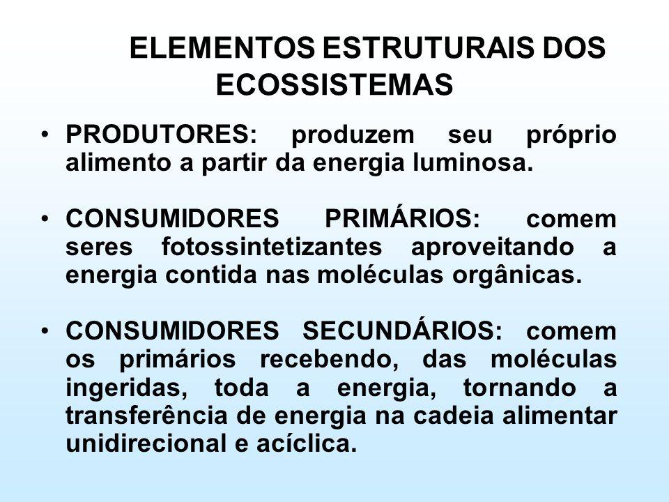 ELEMENTOS ESTRUTURAIS DOS ECOSSISTEMAS •PRODUTORES: produzem seu próprio alimento a partir da energia luminosa. •CONSUMIDORES PRIMÁRIOS: comem seres f
