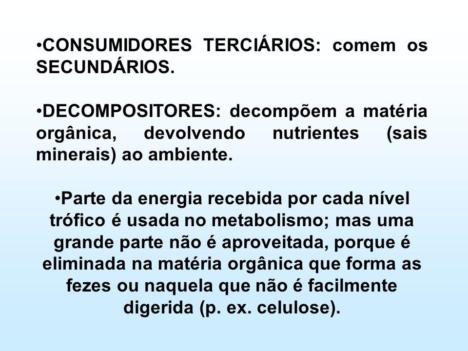 •CONSUMIDORES TERCIÁRIOS: comem os SECUNDÁRIOS. •DECOMPOSITORES: decompõem a matéria orgânica, devolvendo nutrientes (sais minerais) ao ambiente. •Par
