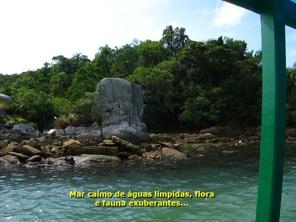 Mar calmo de águas límpidas, flora e fauna exuberantes...