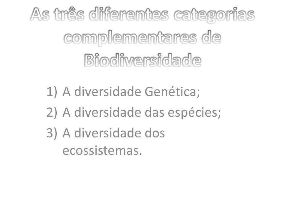 1)A diversidade Genética; 2)A diversidade das espécies; 3)A diversidade dos ecossistemas.