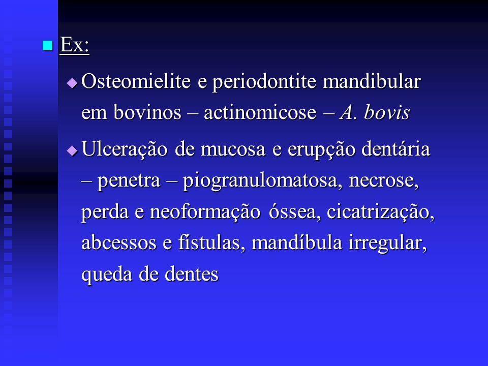  Ex:  Osteomielite e periodontite mandibular em bovinos – actinomicose – A. bovis  Ulceração de mucosa e erupção dentária – penetra – piogranulomat