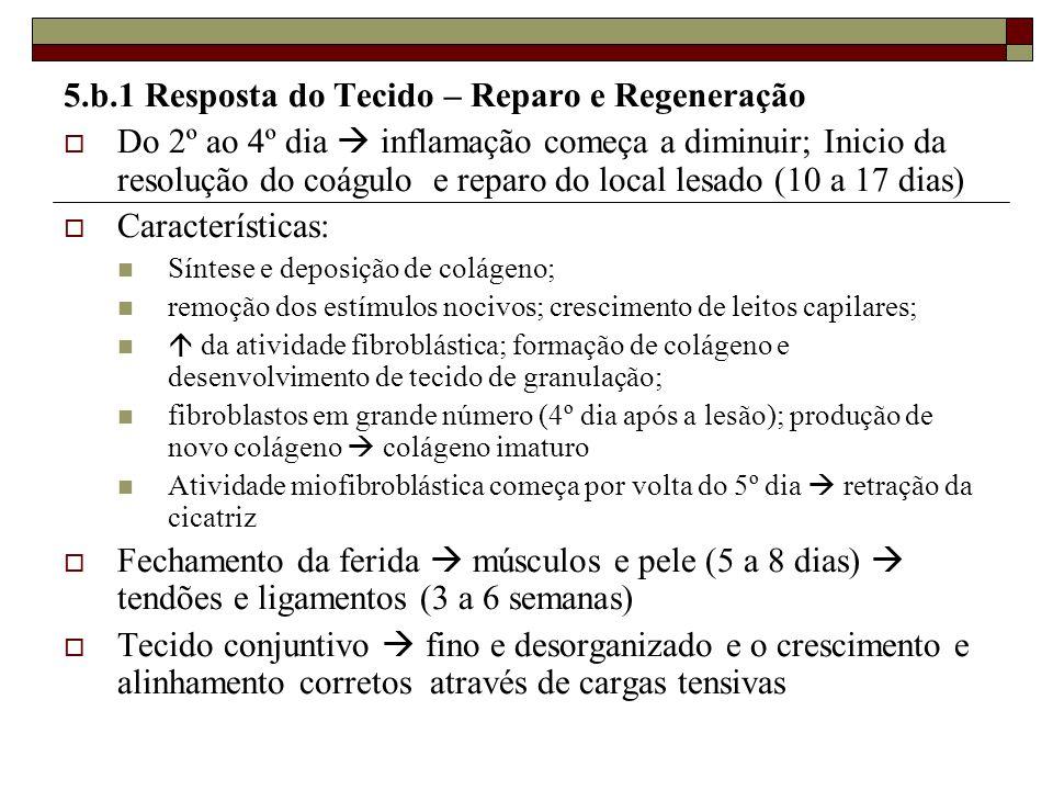 5.b.1 Resposta do Tecido – Reparo e Regeneração  Do 2º ao 4º dia  inflamação começa a diminuir; Inicio da resolução do coágulo e reparo do local les