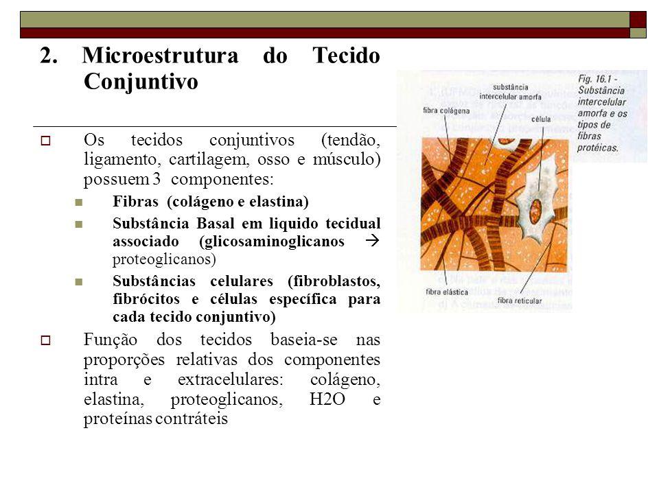 2. Microestrutura do Tecido Conjuntivo  Os tecidos conjuntivos (tendão, ligamento, cartilagem, osso e músculo) possuem 3 componentes:  Fibras (colág