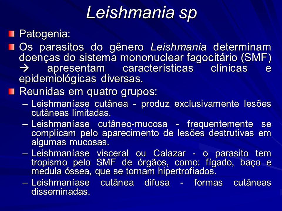 Leishmania sp Diagnóstico –Clínico –Laboratorial –Tegumentar  exame direto das lesões (maioria) –Evolução da doença  acompanhada através de intradernorreação.