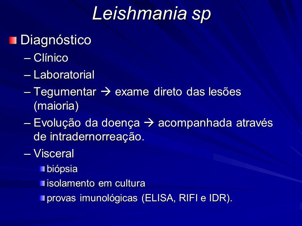 Leishmania sp Diagnóstico –Clínico –Laboratorial –Tegumentar  exame direto das lesões (maioria) –Evolução da doença  acompanhada através de intrader